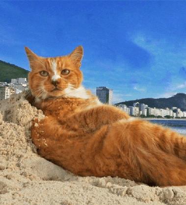 岩合光昭之猫步走世界~里约热内卢篇